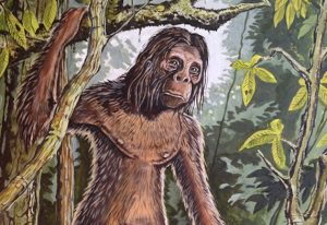 grafton elliot smith the orang pendek and mysterious fossil finds 1 1 300x206